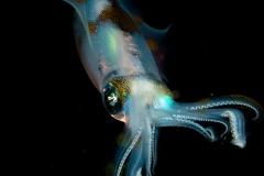 ken-squid