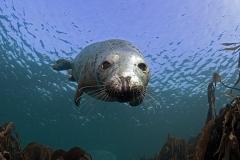 mark_Seal 11